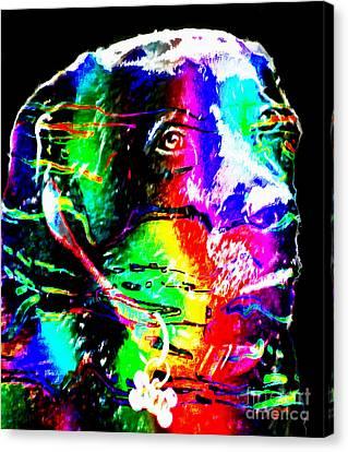 Rainbow Lab Canvas Print by Barbara Griffin