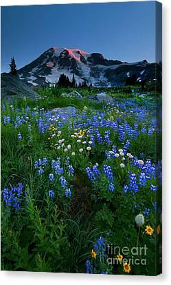 Rainier Wildflower Dawn Canvas Print by Mike  Dawson