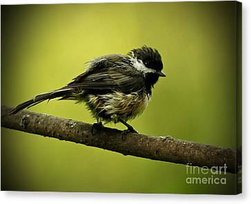 Rainy Days - Chickadee Canvas Print by Inspired Nature Photography Fine Art Photography