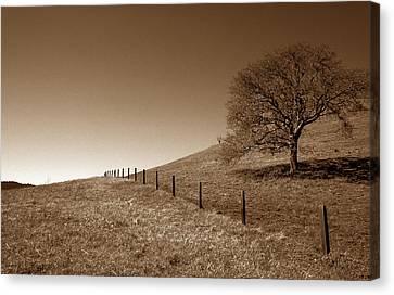 Ranch Road Oak Canvas Print by Kathy Yates