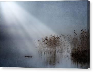 Rays Of Light Canvas Print by Joana Kruse