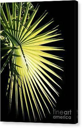 Rays Of Light Canvas Print by Sabrina L Ryan