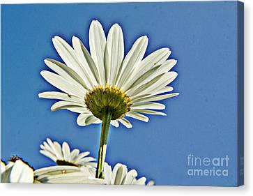 Reach For The Blue Sky Canvas Print by Darleen Stry