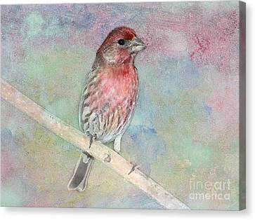 Ready To Sing My Song Canvas Print by Betty LaRue