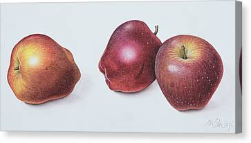 Red Apples Canvas Print by Margaret Ann Eden