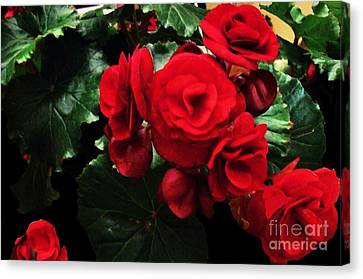 Red Ever Blooming Canvas Print by Marsha Heiken