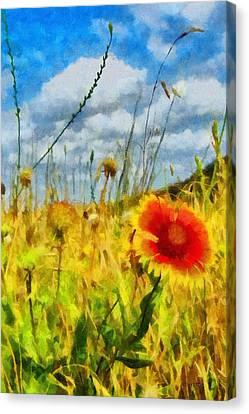 Red Flower In The Field Canvas Print by Jeff Kolker