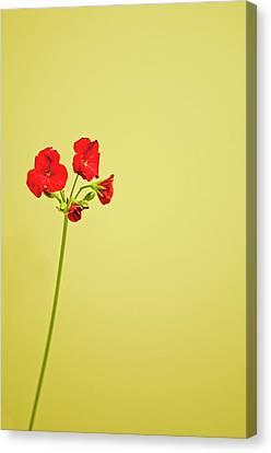 Red Geranium Canvas Print by Gail Shotlander