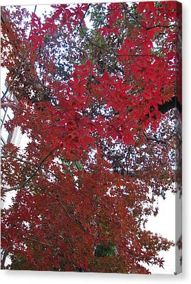 Red Leaves Of Windsor Canvas Print by Shawn Hughes