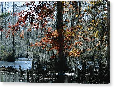 Red Maple And Bald Cypress Trees Canvas Print by Raymond Gehman