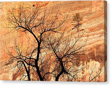 Red Rocks And Trees Canvas Print by Adam Pender