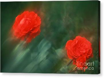 Red Roses 55-43-s Canvas Print by Renata Ratajczyk
