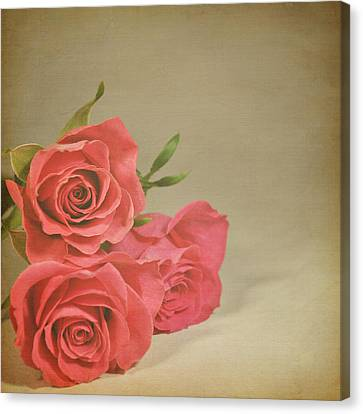 Red Roses Canvas Print by Photo - Lyn Randle