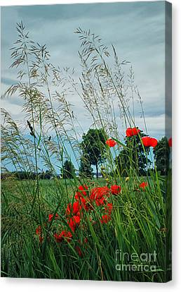 Red Spots In The Wind Canvas Print by Jutta Maria Pusl