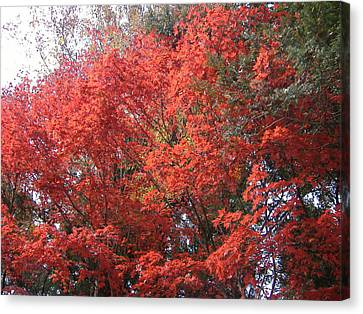 Red Tree Canvas Print by Naxart Studio