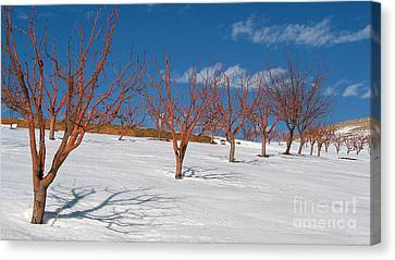 Red Trees Canvas Print by Issam Hajjar