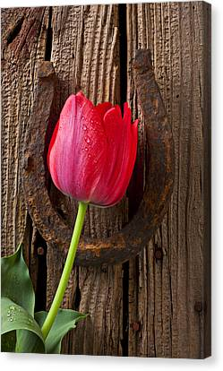 Red Tulip And Horseshoe  Canvas Print by Garry Gay