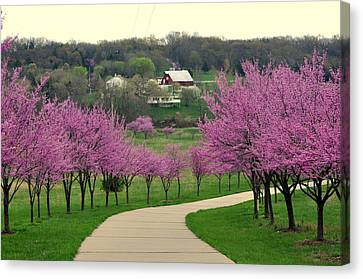Redbud Canvas Print by Marty Koch