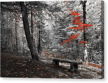 Reds In The Woods Canvas Print by Aimelle