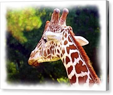 Reticulated Giraffe Canvas Print by Judi Bagwell