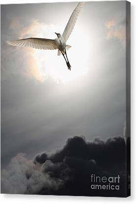 Return To Eternity . Vertical Cut Canvas Print by Wingsdomain Art and Photography