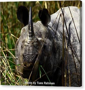 Rhino Canvas Print by Tues Rahman