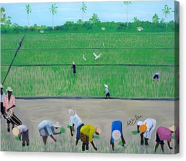Rice Field Haiti 1980 Canvas Print by Nicole Jean-Louis