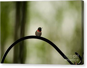 Right Here Waiting Canvas Print by Venura Herath