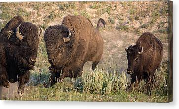 Right Of Way Canvas Print by Sandy Sisti