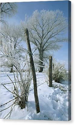 Rime From Rare Fog Coats Fence Canvas Print by Gordon Wiltsie