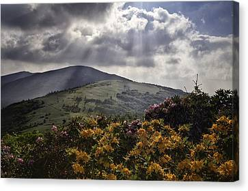 Roan Mountain Afternoon Canvas Print by Rob Travis