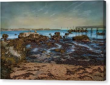 Rock Bottom Canvas Print by Robin-lee Vieira
