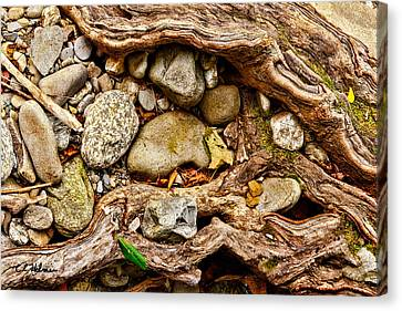 Rocks And Roots Canvas Print by Christopher Holmes