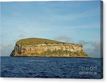 Rocky Cliffs Of Darwin Island Canvas Print by Sami Sarkis