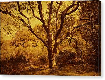 Roots Of Wisdom. Wicklow Hills. Ireland  Canvas Print by Jenny Rainbow