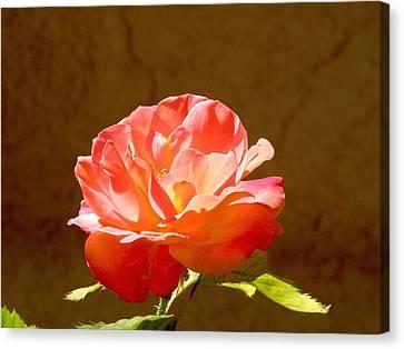 Rose Canvas Print by FeVa  Fotos