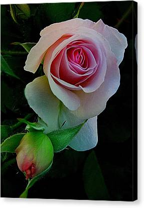 Rose Of My Rose Canvas Print by Shirley Sirois