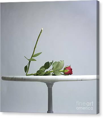 Rose With A Broken Stem On A Table. Canvas Print by Bernard Jaubert