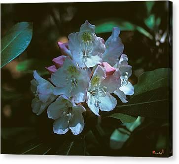 Rosebay Rhododendron 3b Canvas Print by Gerry Gantt