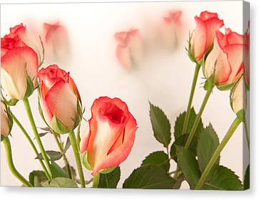 Roses Canvas Print by Tom Gowanlock