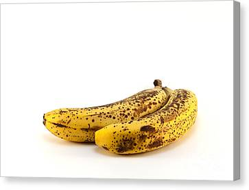 Rotten Bananas Canvas Print by Blink Images