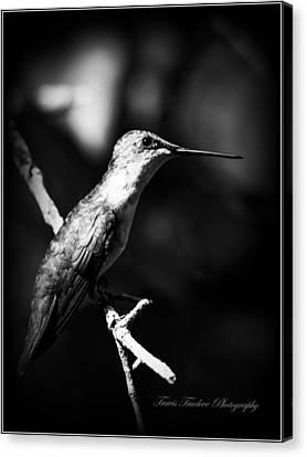 Ruby-throated Hummingbird - Signature Canvas Print by Travis Truelove