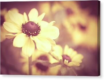 Rudbeckia Flowers Canvas Print by Dhmig Photography