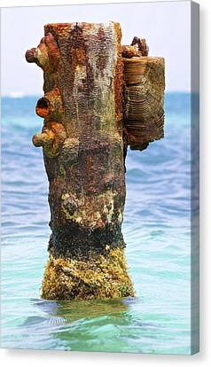 Rusted Dock Pier Of The Caribbean II Canvas Print by David Letts