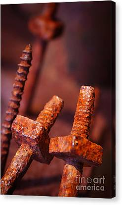 Rusty Screws Canvas Print by Carlos Caetano