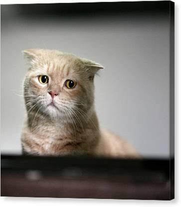 Sad Cat Canvas Print by LeoCH Studio