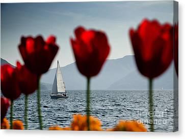 Sailing Boat And Tulip Canvas Print by Mats Silvan