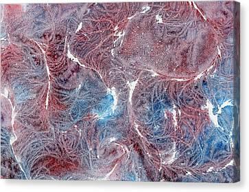 Salty Lashes Canvas Print by Marsha Elliott