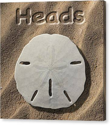 Sand Dollar Heads Canvas Print by Mike McGlothlen
