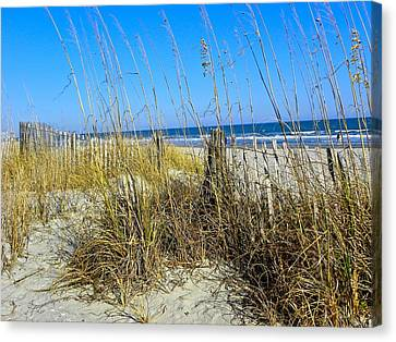 Sand Dunes Canvas Print by Eve Spring